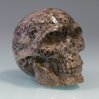 Carved Skull from fossil Coral / Bryozoen – picture 3