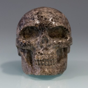 Carved Skull from fossil Coral / Bryozoen – picture 4