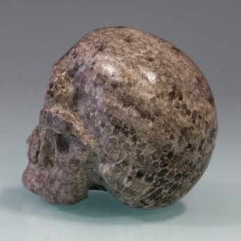 Carved Skull from fossil Coral / Bryozoen – picture 7