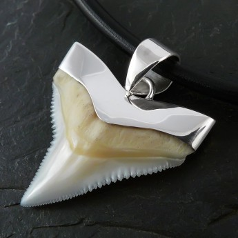 Shark Tooth Pendant with Silver