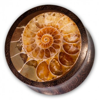 Horn Ear Plug with Ammonite Inlay – picture 1