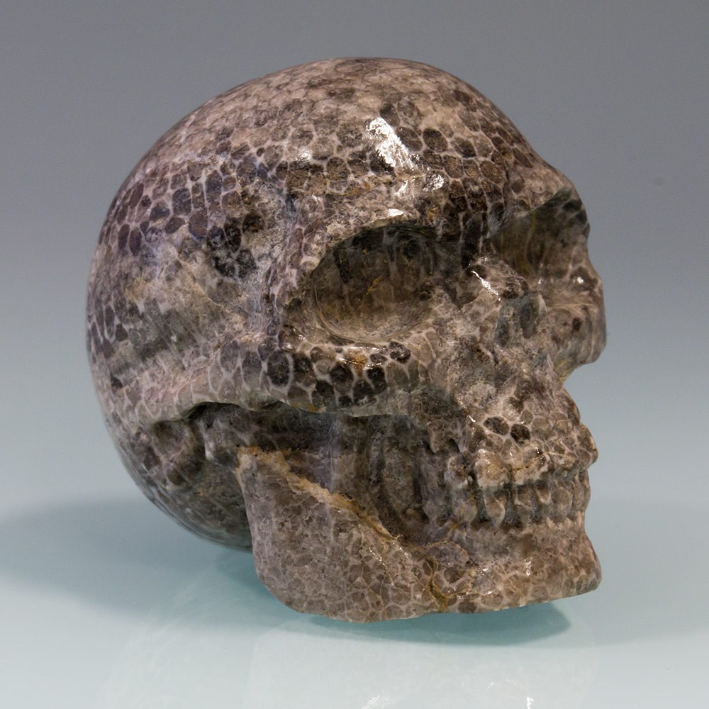 Carved skull from fossil coral bryozoen antiques and